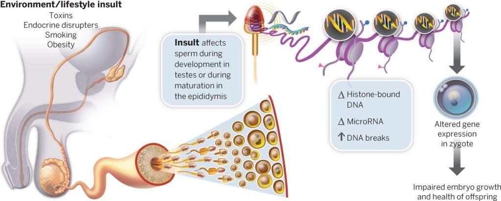 Epigenetics Nature Review